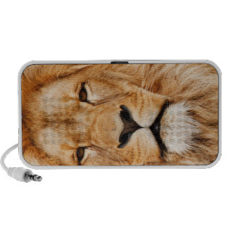 LION THE WILD TRAVELLING SPEAKERS
