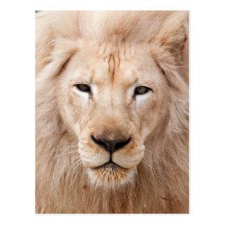lion unleased postcard