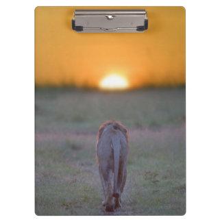 Lion walking clipboards