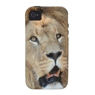 Lion Wild Animal Cat iPhone 4/4S Covers
