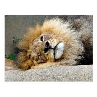 Lion Wink Postcard