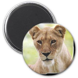 lioness_10x10 6 cm round magnet