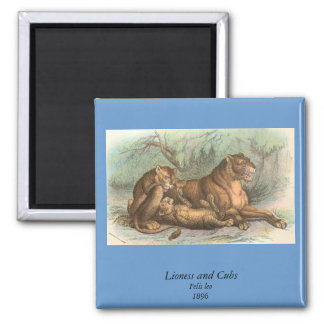 Lioness and Cubs, Felis leo Refrigerator Magnets