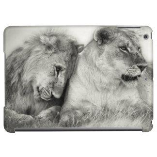 Lioness and son sitting and nuzzlingin Botswana