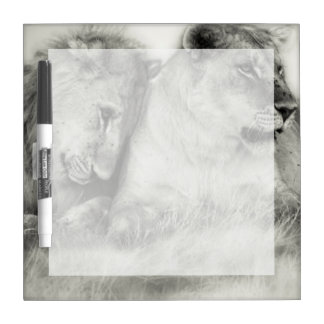 Lioness and son sitting and nuzzlingin Botswana Dry Erase Board