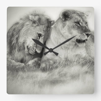 Lioness and son sitting and nuzzlingin Botswana Square Wall Clock