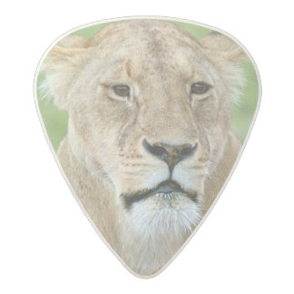 Lioness and Two Cubs, East Africa, Tanzania, Acetal Guitar Pick