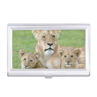 Lioness and Two Cubs, East Africa, Tanzania, Business Card Holder