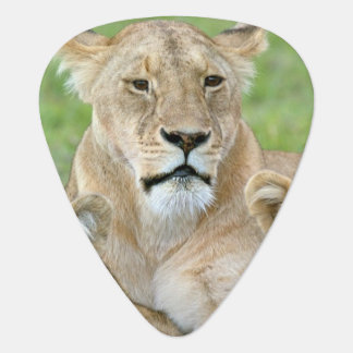 Lioness and Two Cubs, East Africa, Tanzania, Guitar Pick