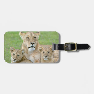 Lioness and Two Cubs, East Africa, Tanzania, Luggage Tag