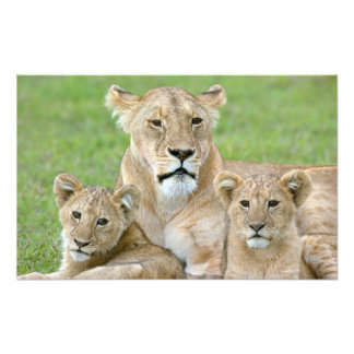 Lioness and Two Cubs, East Africa, Tanzania, Photo Art