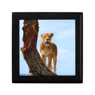 Lioness Gift Box