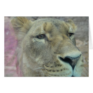 Lioness III Note Card