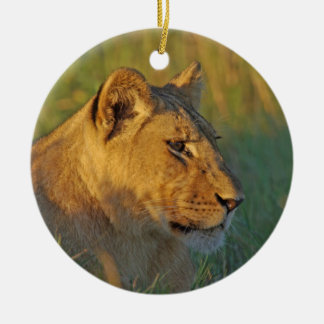 Lioness in Afternoon Light Ornament