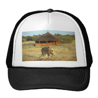 Lioness in Namibia Africa Mesh Hats