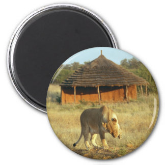 Lioness in Namibia Africa Fridge Magnets