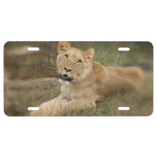 lioness license plate