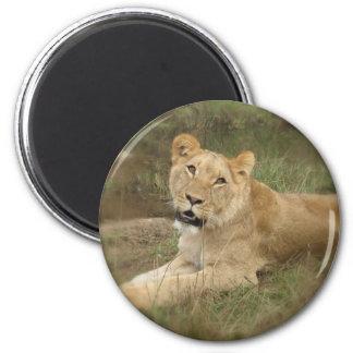 Lioness Magnet Magnet