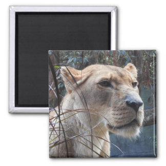 Lioness Magnet