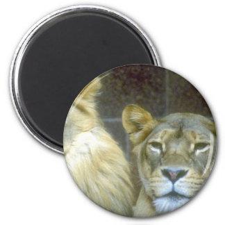 Lioness Fridge Magnets
