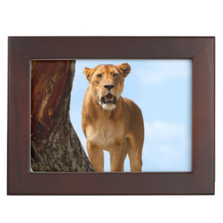 Lioness Memory Boxes