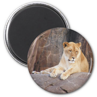 Lioness on the Rocks 6 Cm Round Magnet