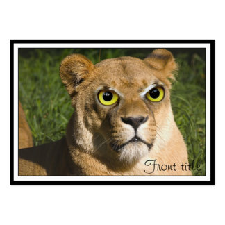 Lioness on Watch Pack Of Chubby Business Cards