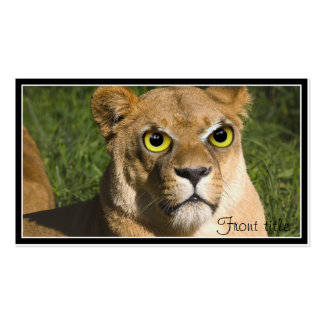 Lioness on Watch Pack Of Standard Business Cards