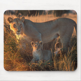 Lioness (Panthera Leo) And Cub Mouse Mat