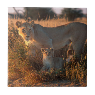 Lioness (Panthera Leo) And Cub Tile