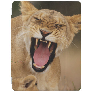 Lioness (Panthera Leo) Growling With Cub iPad Cover