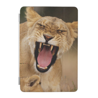Lioness (Panthera Leo) Growling With Cub iPad Mini Cover