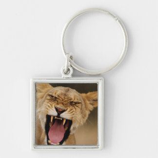 Lioness (Panthera Leo) Growling With Cub Key Ring