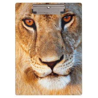 Lioness (Panthera Leo) Portrait. Tarangire Clipboard