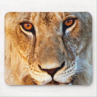 Lioness (Panthera Leo) Portrait. Tarangire Mouse Mat