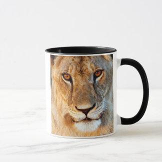 Lioness (Panthera Leo) Portrait. Tarangire Mug