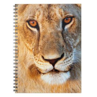 Lioness (Panthera Leo) Portrait. Tarangire Notebooks