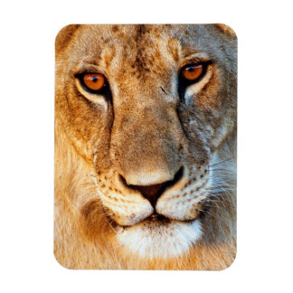 Lioness (Panthera Leo) Portrait. Tarangire Rectangular Photo Magnet