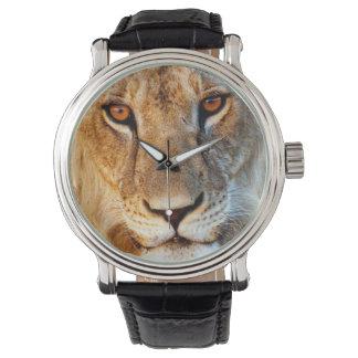 Lioness (Panthera Leo) Portrait. Tarangire Watch