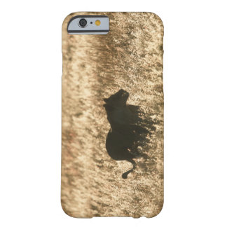 Lioness (Panthera leo) silhouetted in long grass Barely There iPhone 6 Case