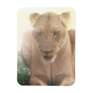 Lioness Profile Flexible Magnet Magnets