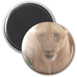Lioness Profile Magnet Magnet