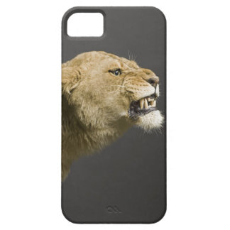 Lioness roaring 2 iPhone 5 cover