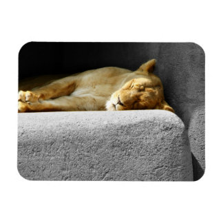 Lioness Sleeping Flexible Magnet