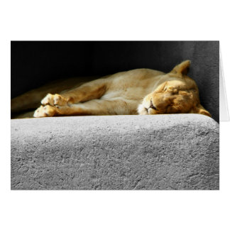 Lioness Sleeping Greeting Card