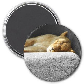 Lioness Sleeping Magnet