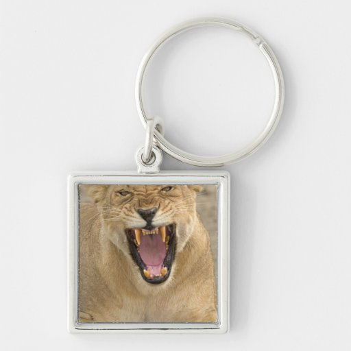 Lioness Snarl B, East Africa, Tanzania, Silver-Colored Square Key Ring