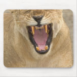 Lioness Snarl B, East Africa, Tanzania, Mouse Pads