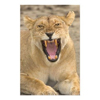 Lioness Snarl B, East Africa, Tanzania, Photo Art