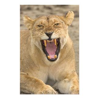 Lioness Snarl B, East Africa, Tanzania, Photo Print